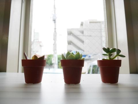 多肉植物、テキトーに寄せ植え