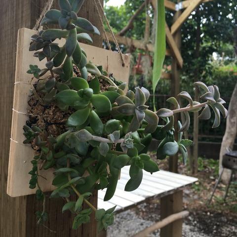 パーゴラに吊るす植物たち。