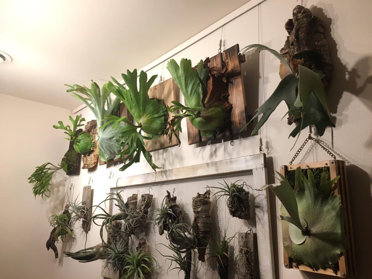 台風に備えて植物を避難。