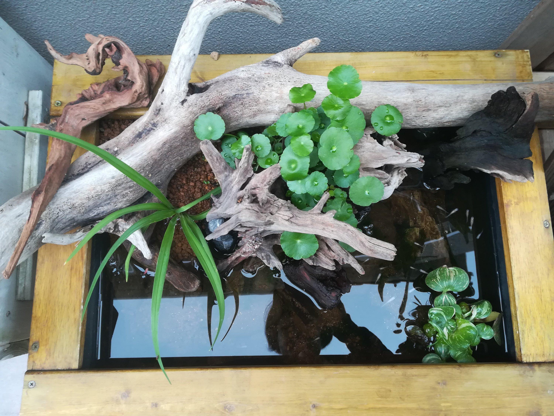トロ舟ビオトープの植物たち。