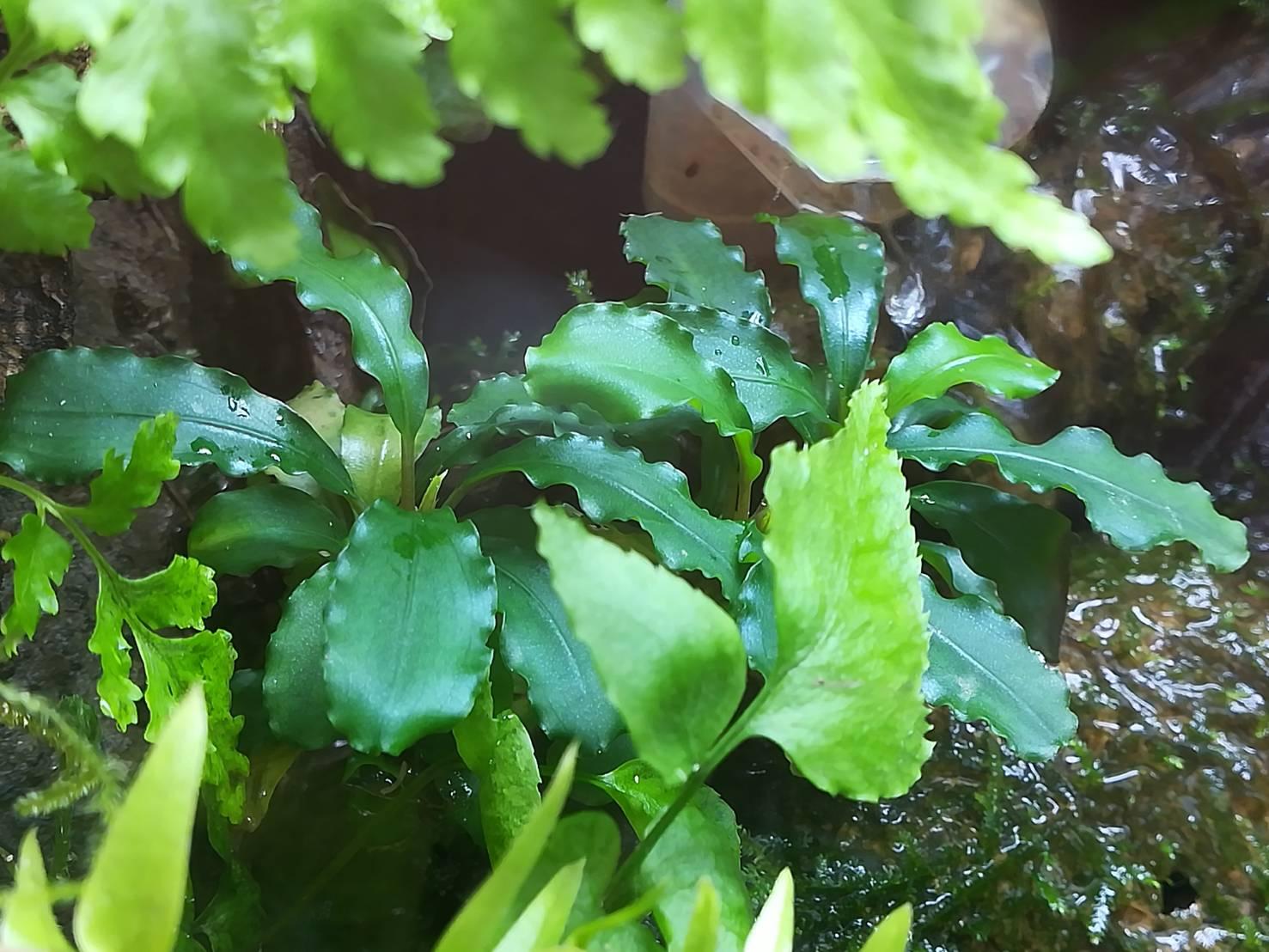 60cmパルダリウムの植物達。底面ろ過改良から半年。