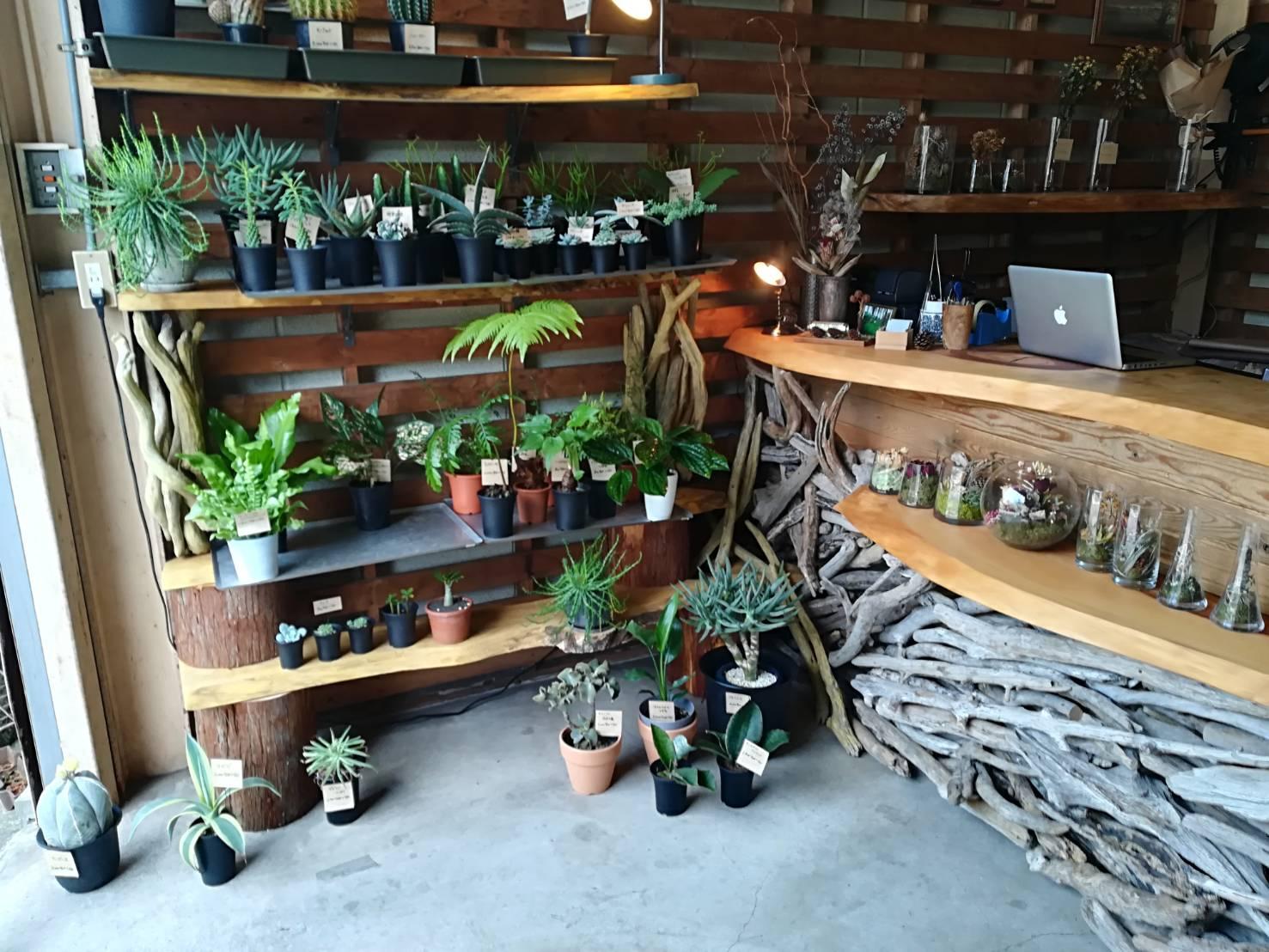 町田の植物屋「なかや植物店」に行ってきた。
