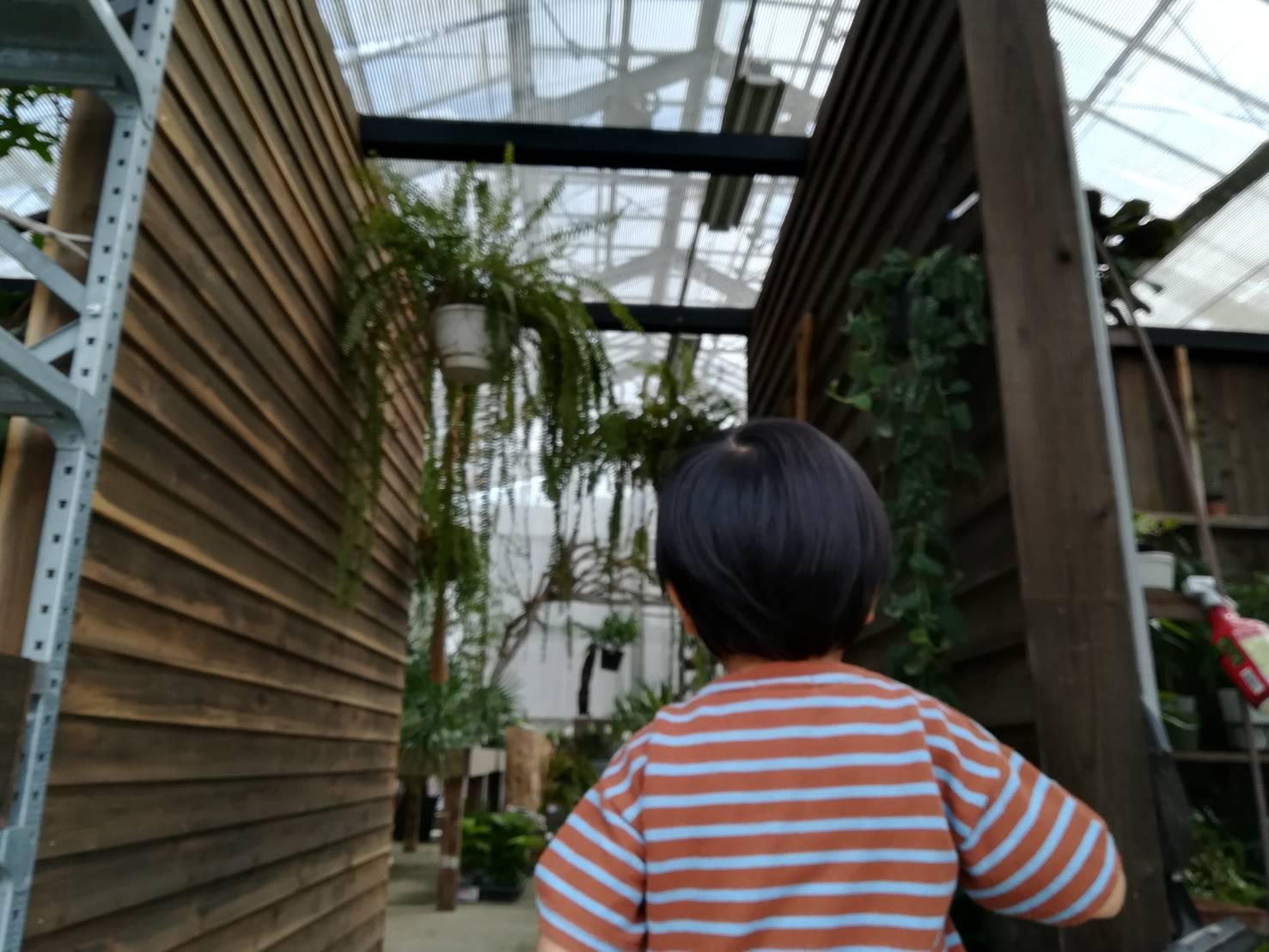 たまプラーザの植物屋「botanical56」に行ってきた。