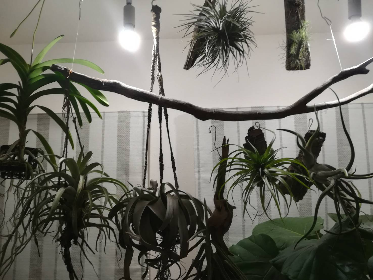 台風から植物を守りましたが。
