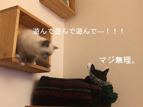 猫の目が開いてない...!時に考えられる原因とは?≪前の日記より②≫