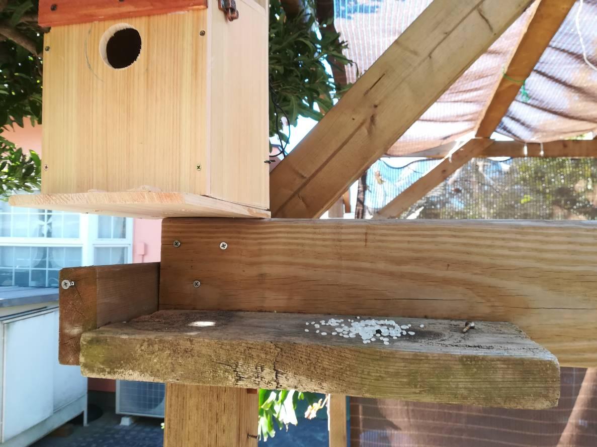 パーゴラに鳥の巣箱を設置しました。≪庭に鳥を呼ぼう!②≫