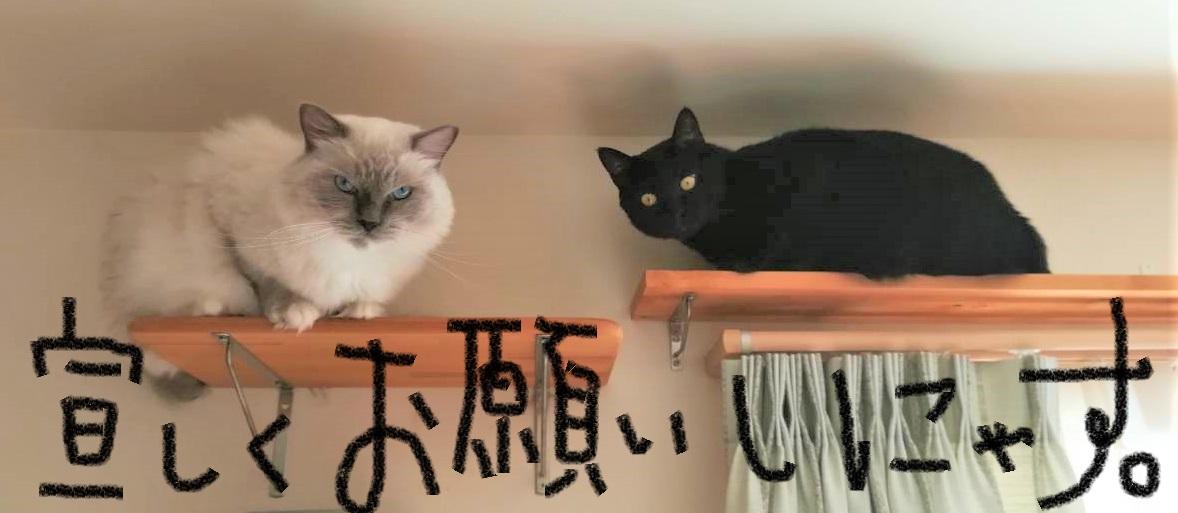 そういえば猫のブログとか書いていたんですが...