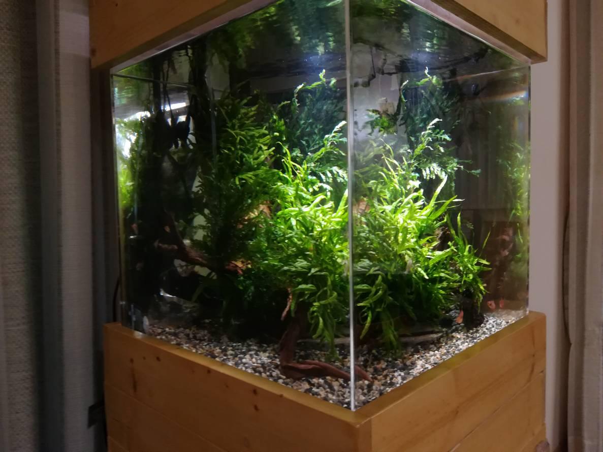 水槽照明にIKEAの植物専用LED「VÄXER」を使ってみた!≪45cmキューブ≫