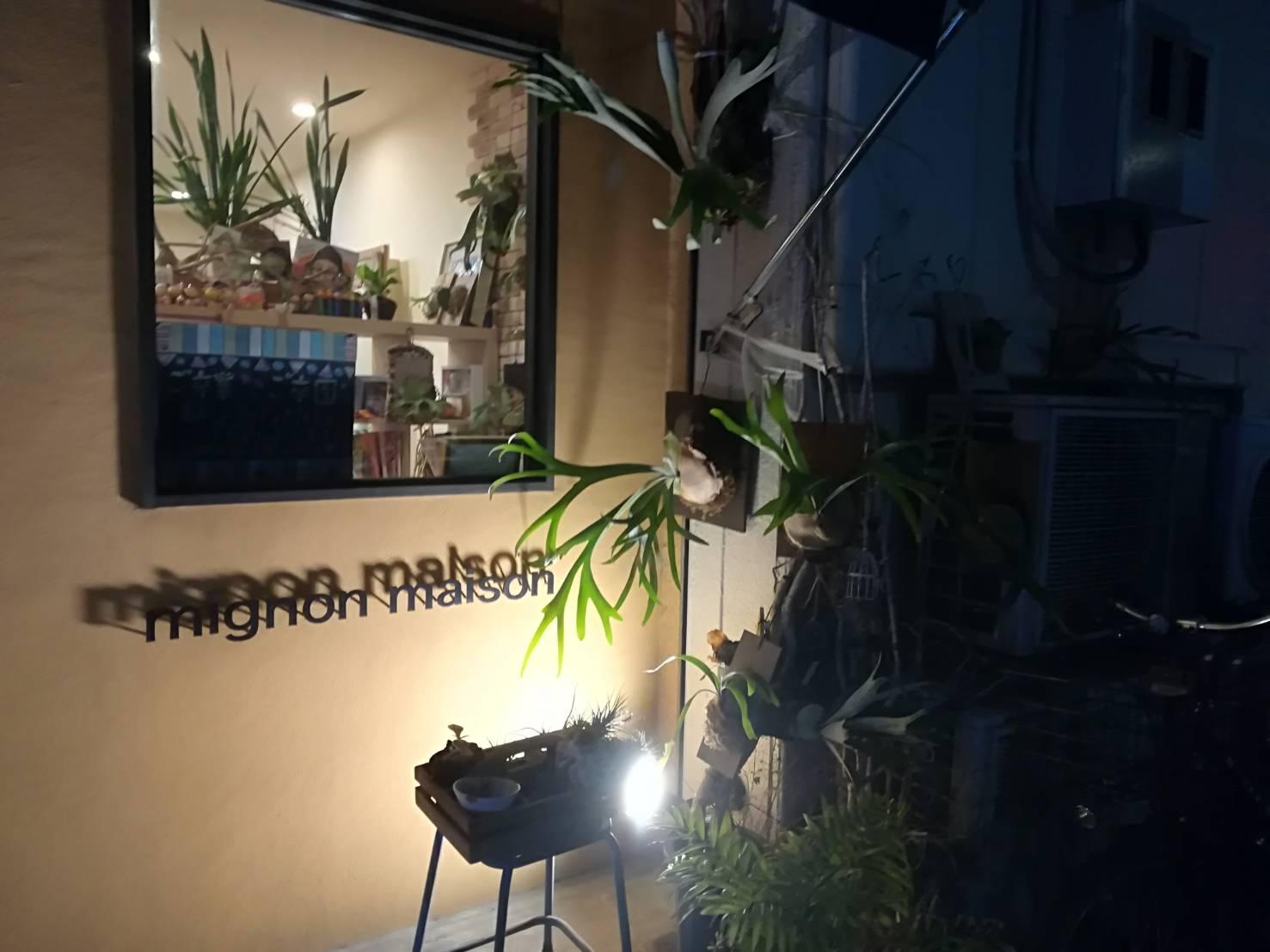 押上のビカクシダがある美容室「mignon maison」にお邪魔してきました...