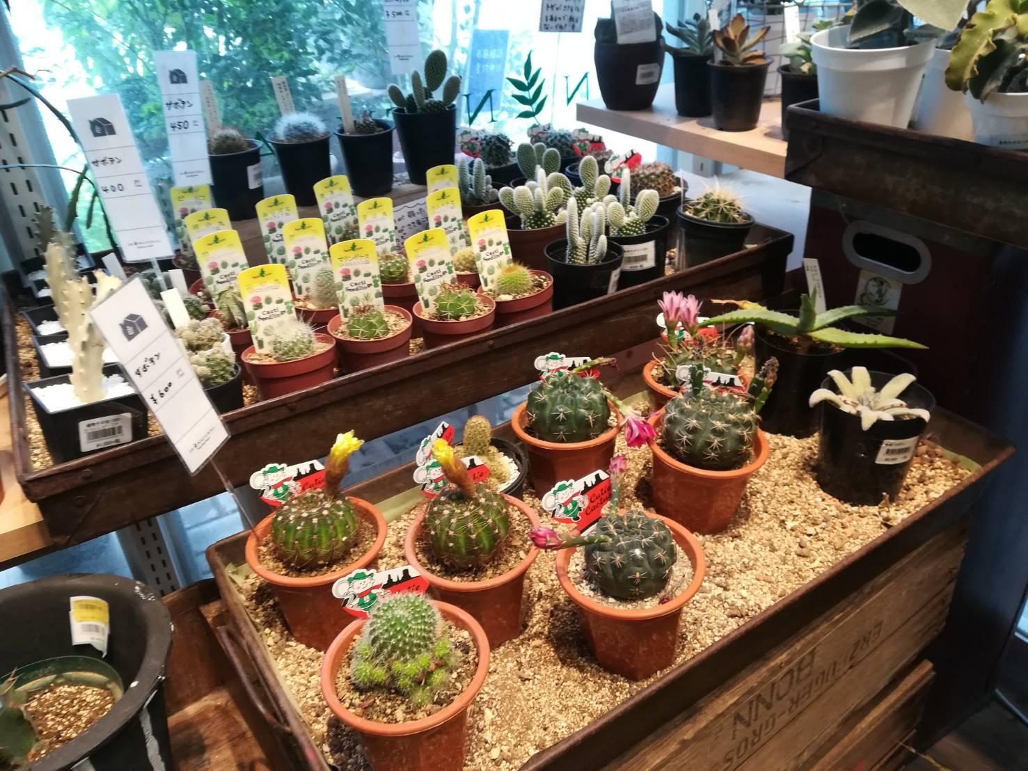 ららぽーと海老名にある植物屋「IN NATURAL」に行ってきた。