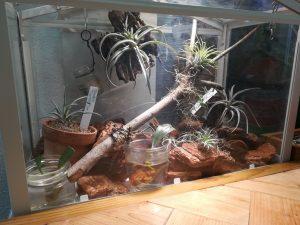 IKEA ミニ温室「SOCKER ソッケル」でチランジアを飼う(育てる)。≪IKEA植物×エアプランツ×IKEAライト≫