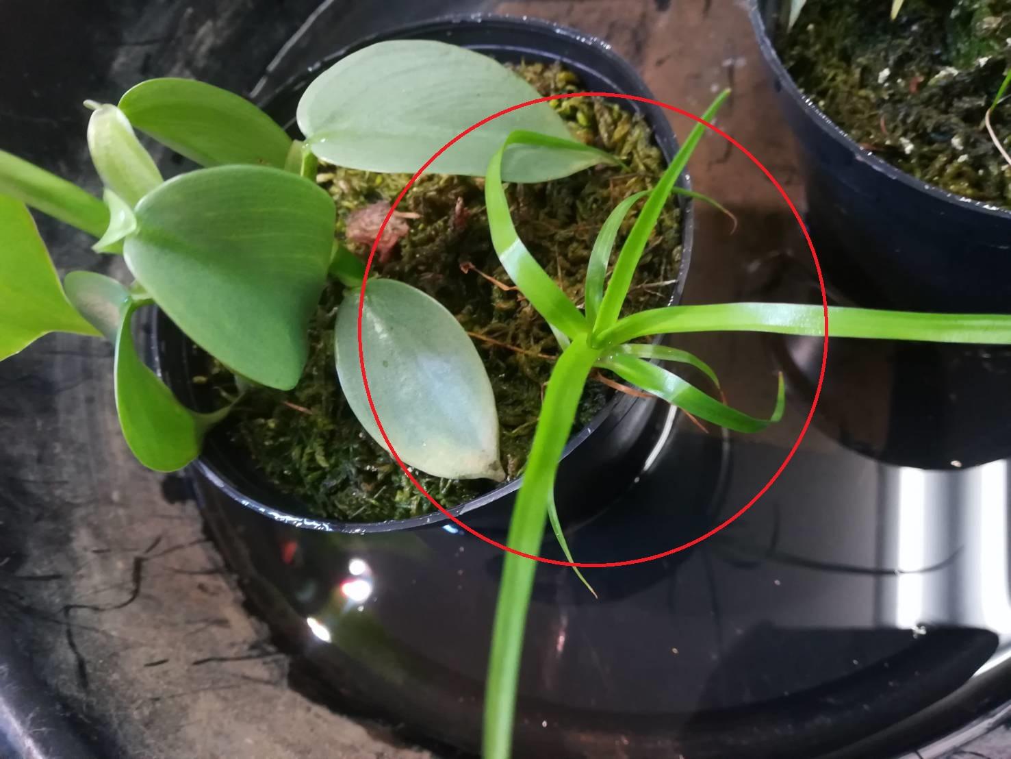 乾燥水苔から生えてくる謎の草たち。≪水苔とは×水苔雑草コレクション≫