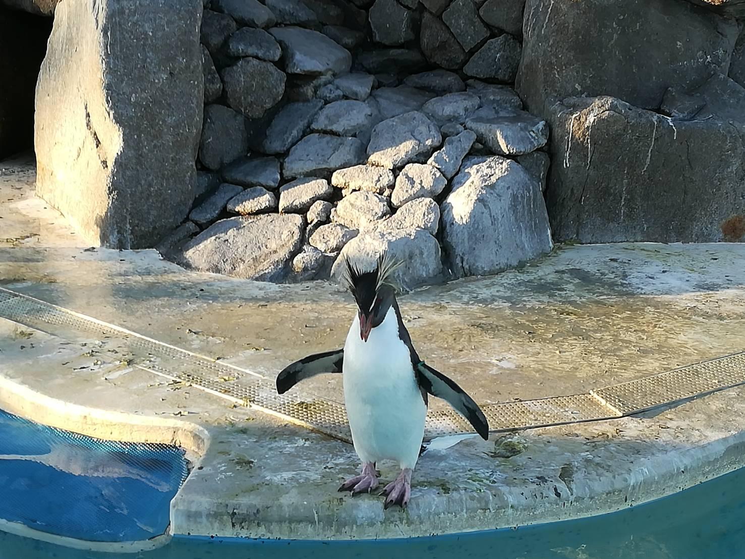 三浦の水族館「油壷マリンパーク」に行ってきた!