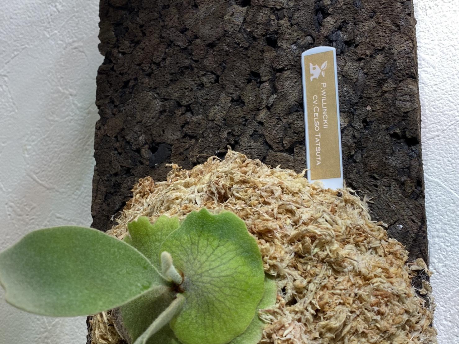 植物タグを「P-touch-cube」で自作してみた。