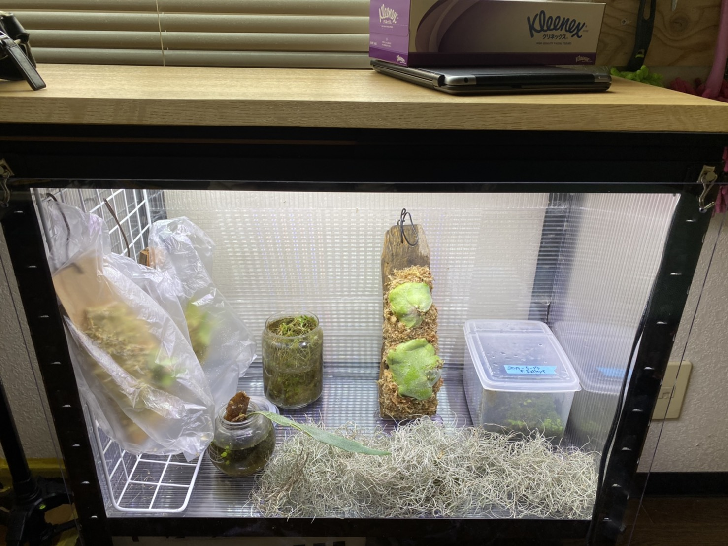 ミニ温室を棚下にDIYしてみた。(植物専用ICU)