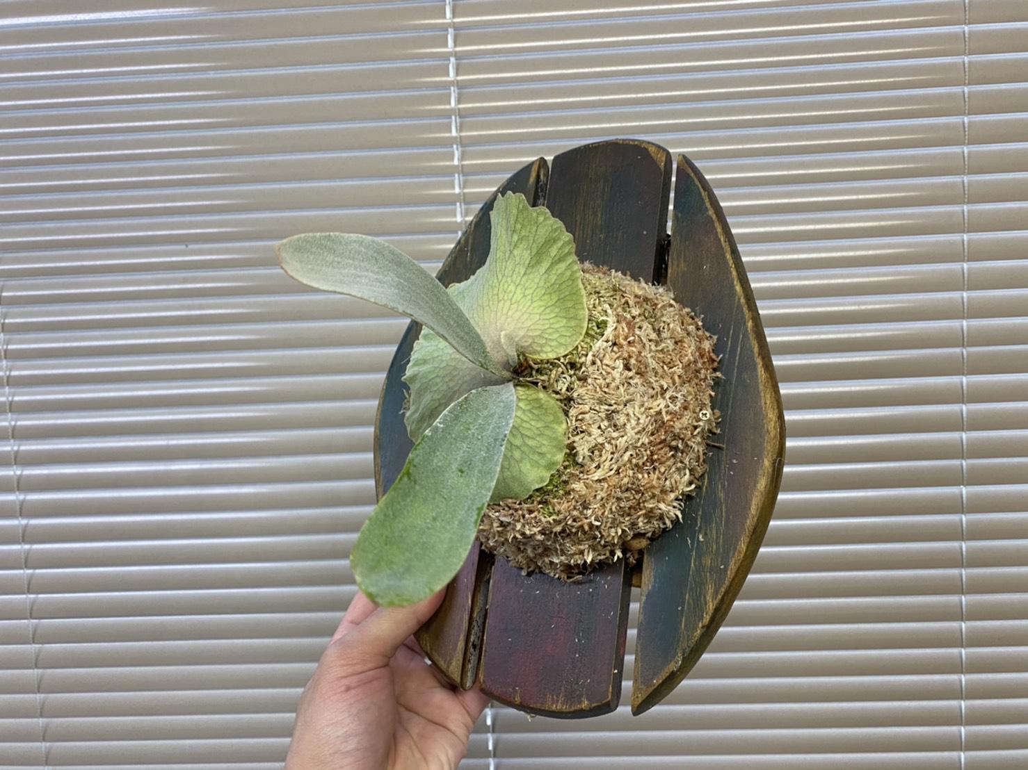 IKEAのまな板が割れたら植物付けてみない?