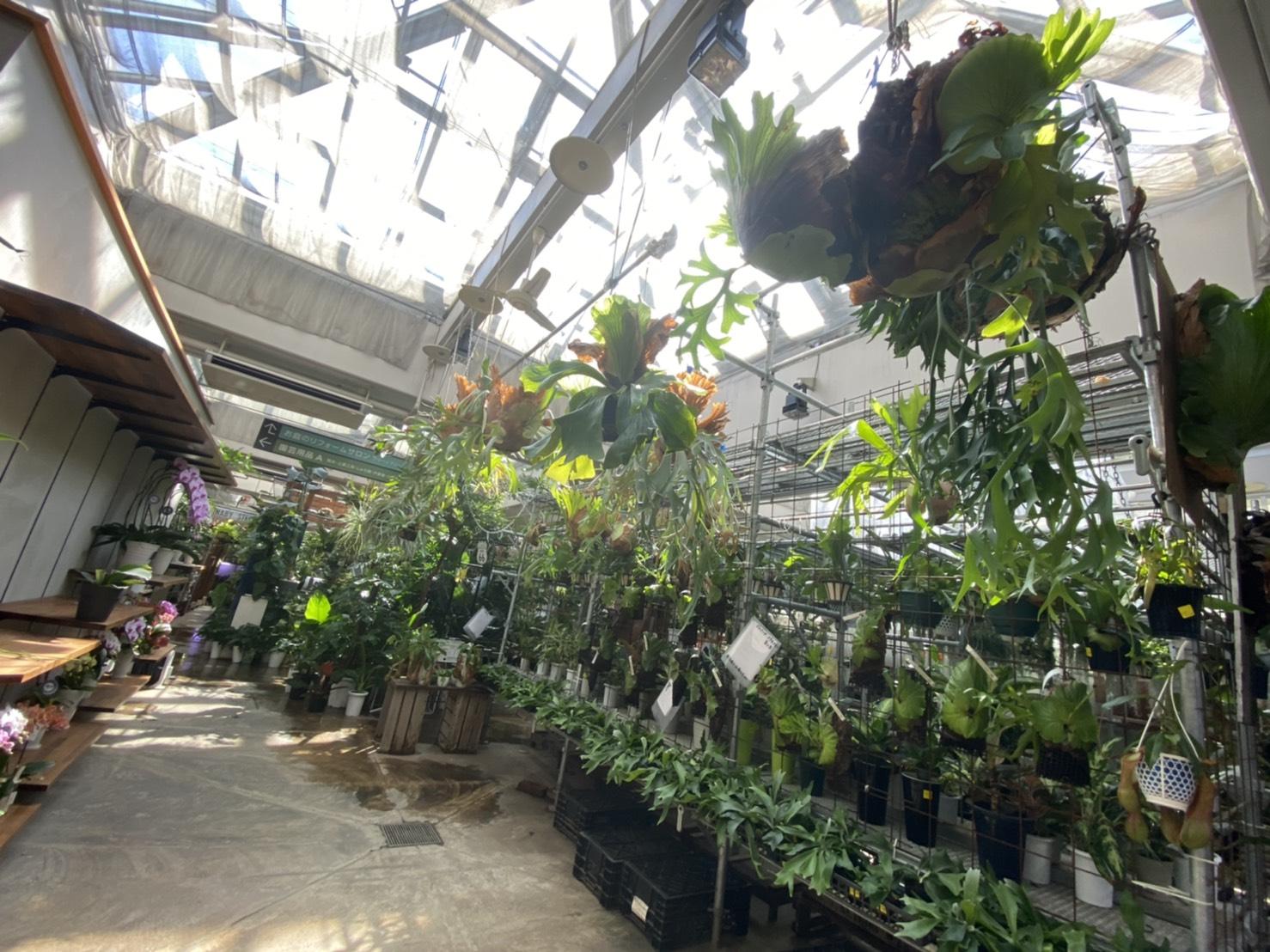 練馬の植物屋「オザキ フラワーパーク」に行ってきた!