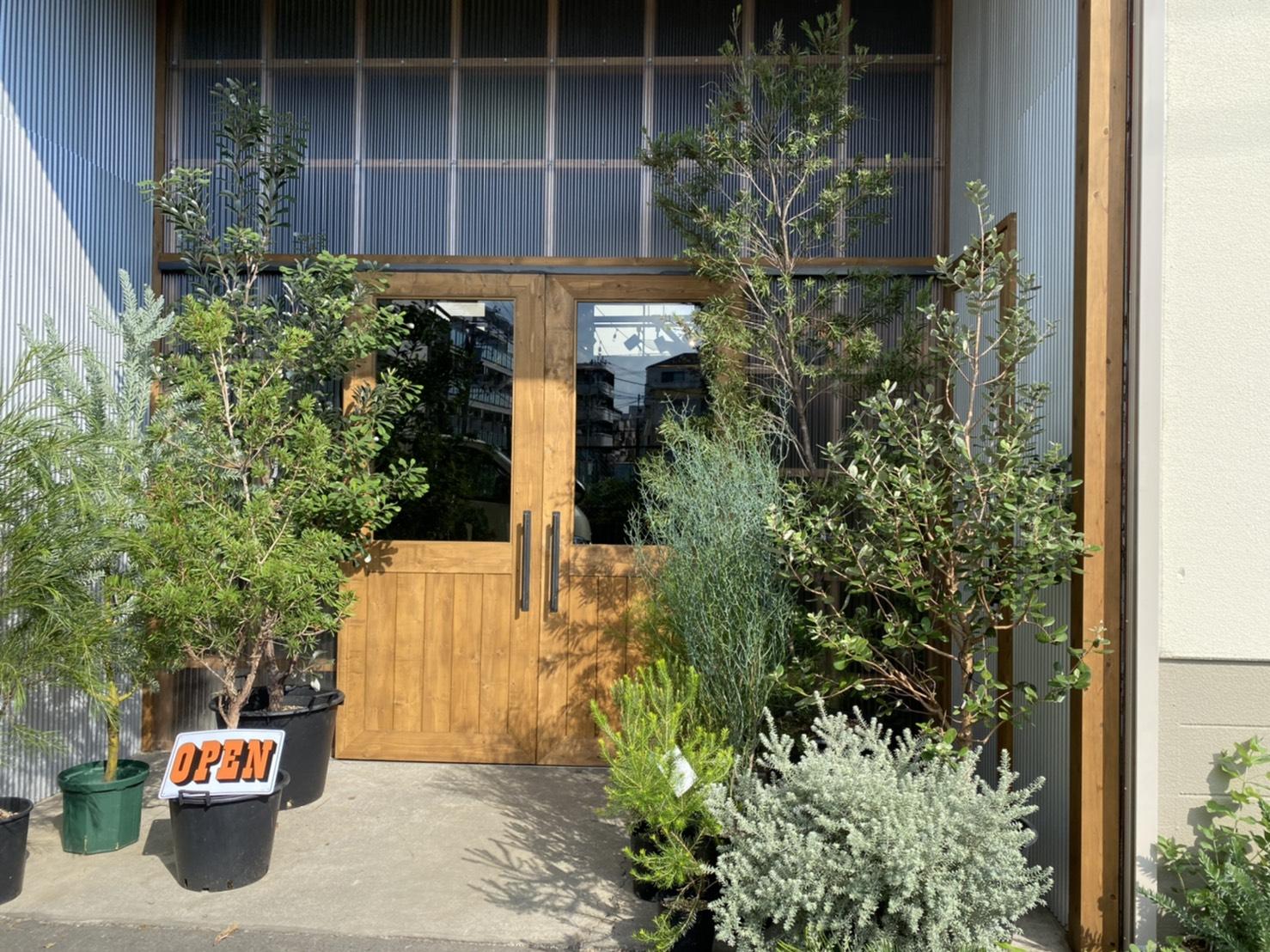 相模原の植物屋「TIANA STORE」に行ってきた!