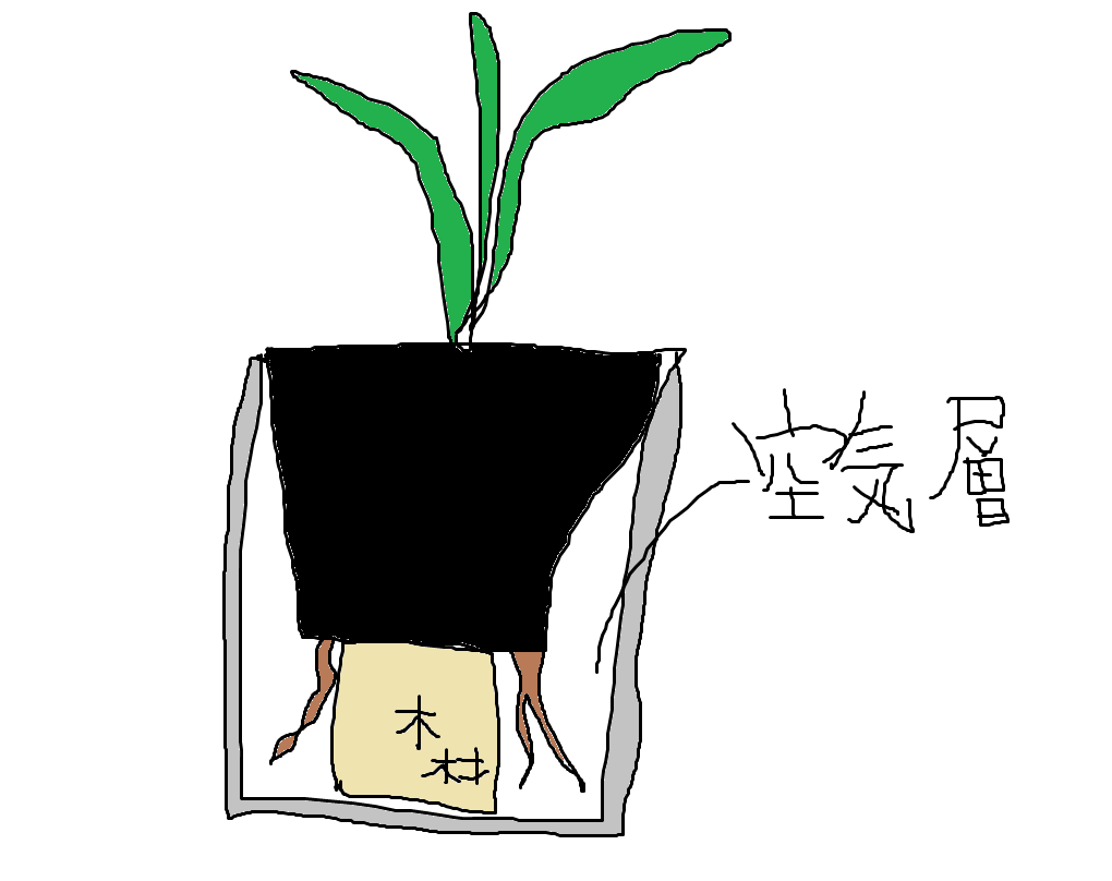 アロカシアの根っこが鉢底から飛び出まくる。