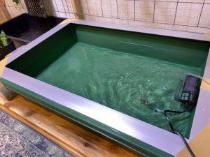 ビカクシダの水遣り用水を作るお話。